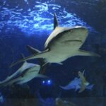 Bucear con tiburones
