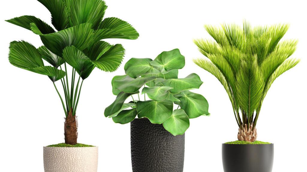 Plantas con energías positivas